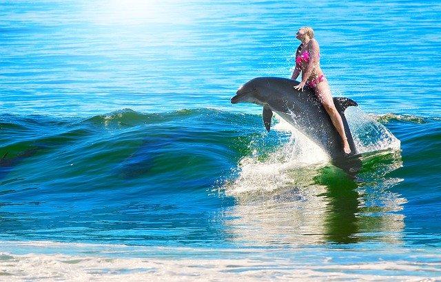 jízda na delfínovi