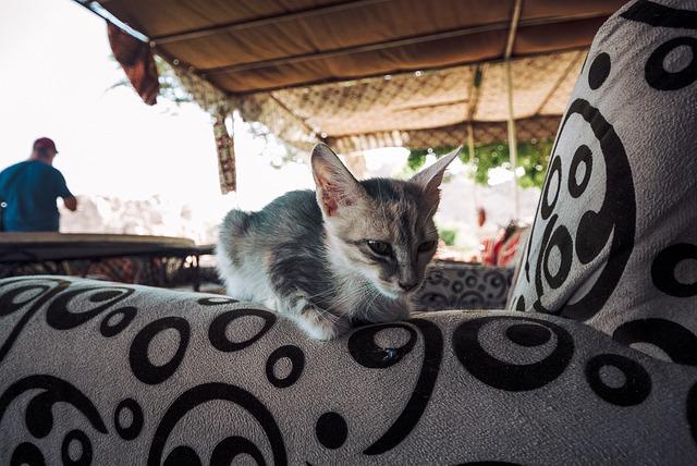kočka na křesle