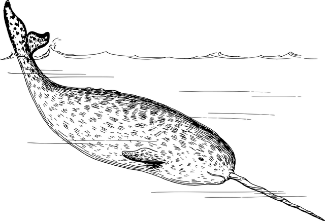 narval