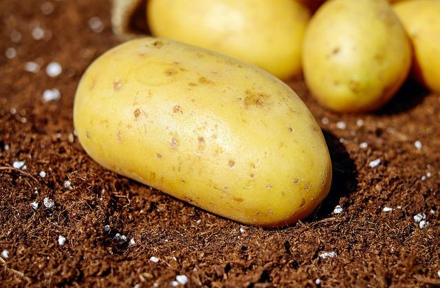 neoloupané brambory