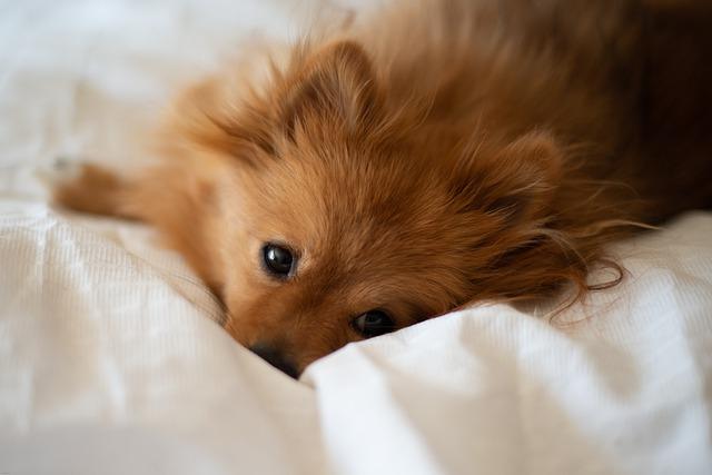 matrace pro psa